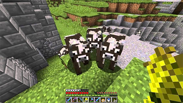 feeding minecraft cows