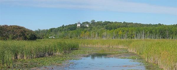 marsh by river edge