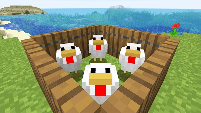 minecraft chickens in pen