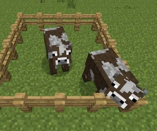 minecraft cows in pen