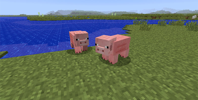 minecraft pigs by water