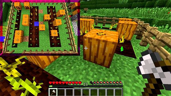 minecraft pumpkin patch