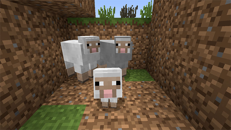 minecraft sheeps